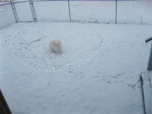 Fresca, the Wonder Dog's Snow Valentine.