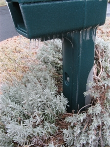 Icicles hang from the mailbox and lavender bush.