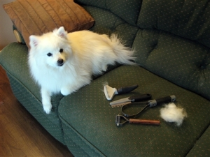 fresca-with-grooming-tools