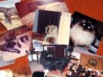 Pics of Pets